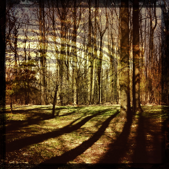 hipstamatic iphone trees backyard shadows lauren kaplan photo