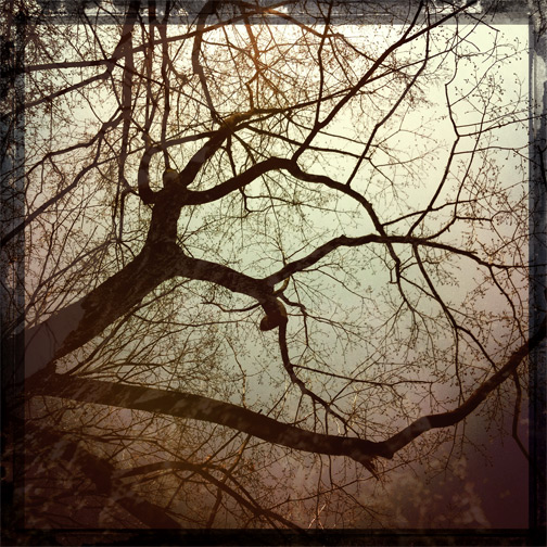 hipstamatic lauren kaplan iphone trees branches shadows