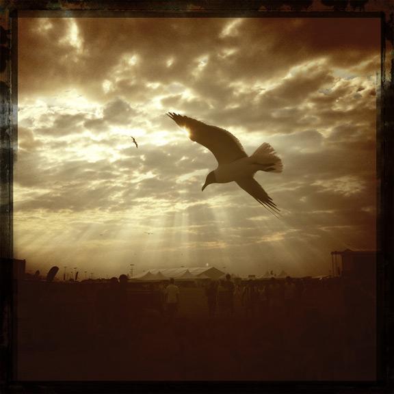seagull sun concert lauren kaplan clouds