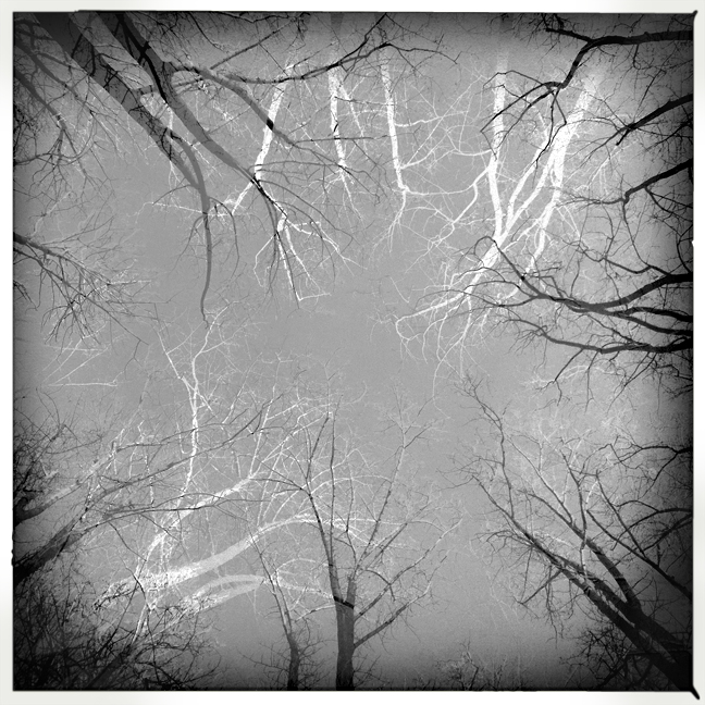 black and white trees positive negative hipstamatic iphone
