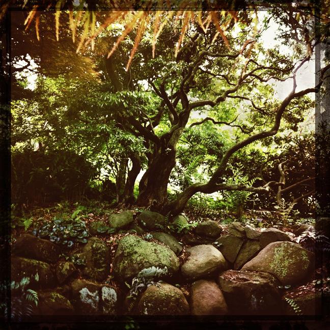 morris arboretum kaplan trees hipstamatic