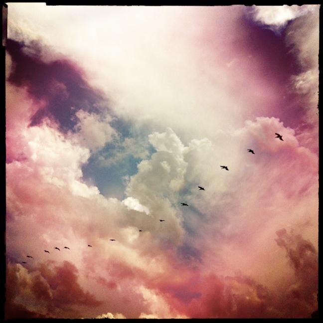 outer banks pelicans kaplan